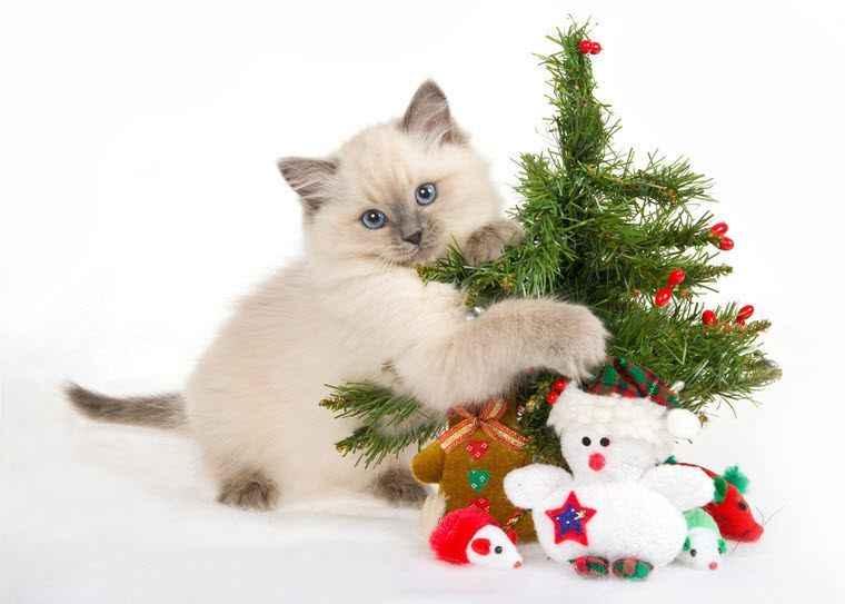 Новый Год 2015 - планы, пожелания, поздравления